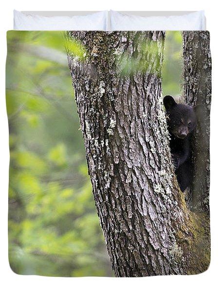 Black Bear Cub In Fork Of Tree Duvet Cover by Dan Friend