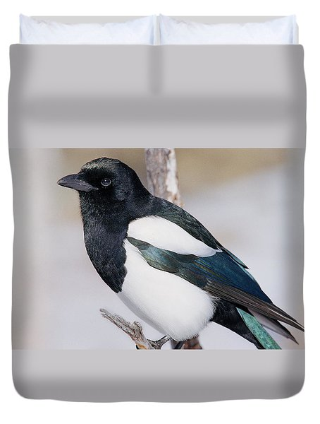 Black-billed Magpie Duvet Cover by Eric Glaser