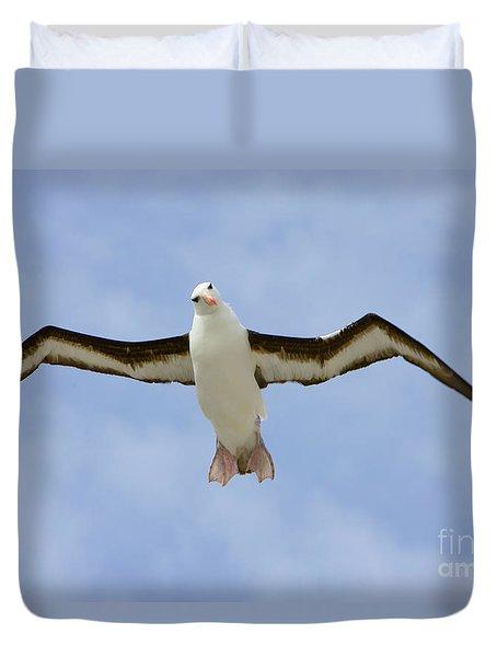 Black-browed Albatross Flying Duvet Cover by Yva Momatiuk John Eastcott