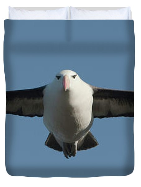 Black-browed Albatross Thalassarche Duvet Cover by Panoramic Images