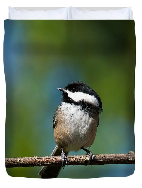 Black Capped Chickadee Perched On A Branch Duvet Cover