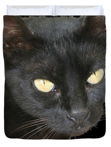 Black Cat Isolated On Black Background Duvet Cover by Tracey Harrington-Simpson