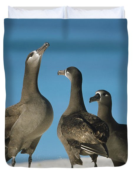 Black-footed Albatross Gamming Group Duvet Cover by Tui De Roy
