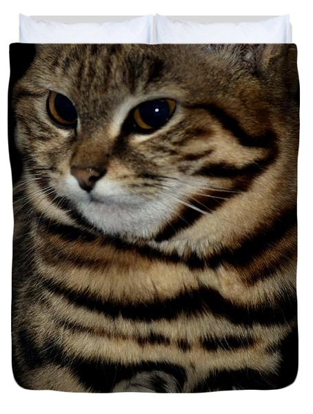Black-footed Cat Duvet Cover by Maria Urso