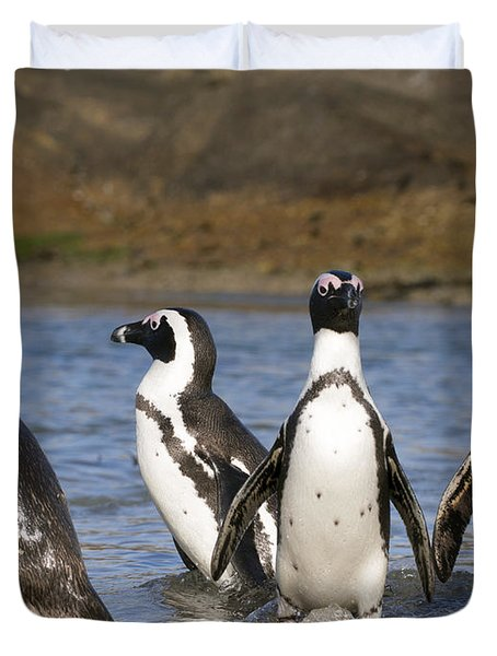 Black-footed Penguins On Beach Cape Duvet Cover by Alexander Koenders
