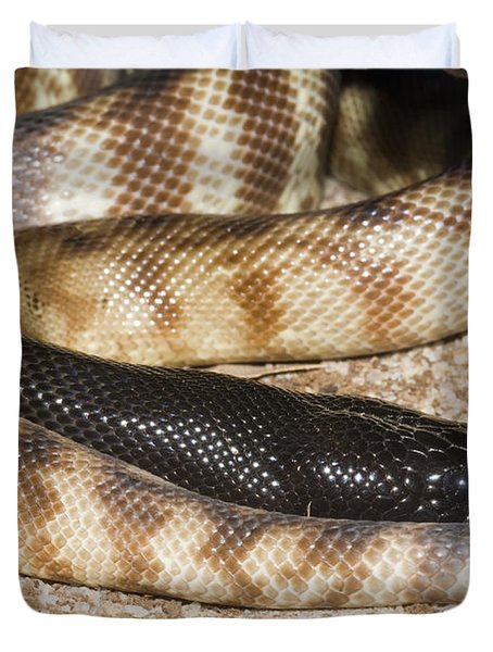 Black-headed Python Duvet Cover by William H. Mullins