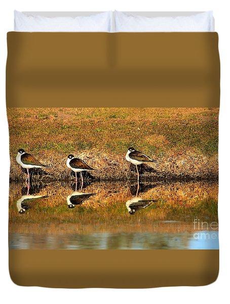 Black-necked Stilts Duvet Cover by Robert Bales