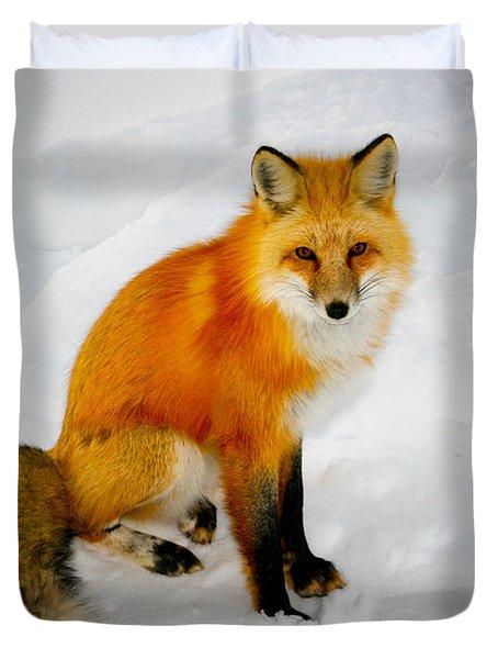 Black Socks Fox Duvet Cover