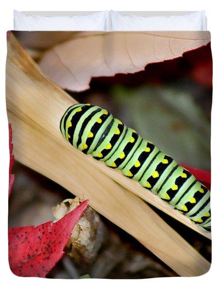 Black Swallowtail Butterfly Caterpillar Duvet Cover