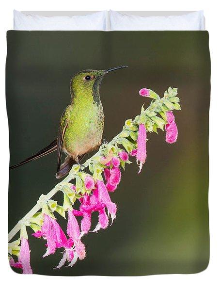 Black-tailed Train-bearer Hummingbird Duvet Cover by Dan Suzio