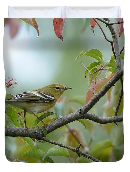 Blackpoll Warbler In The Fall Duvet Cover