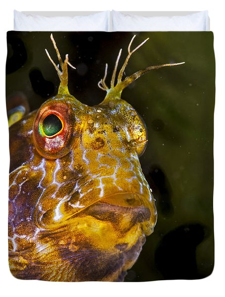 Blenny In Deep Thought Duvet Cover