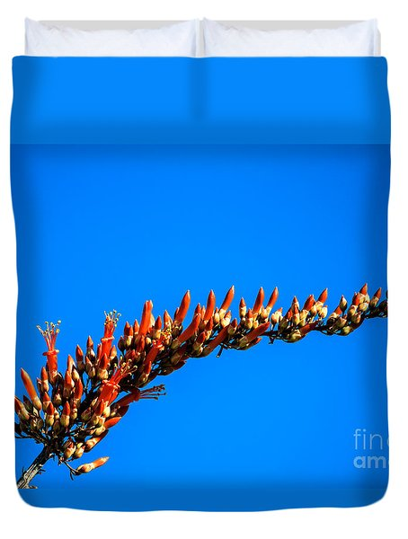 Blooming Ocotillo Duvet Cover by Robert Bales