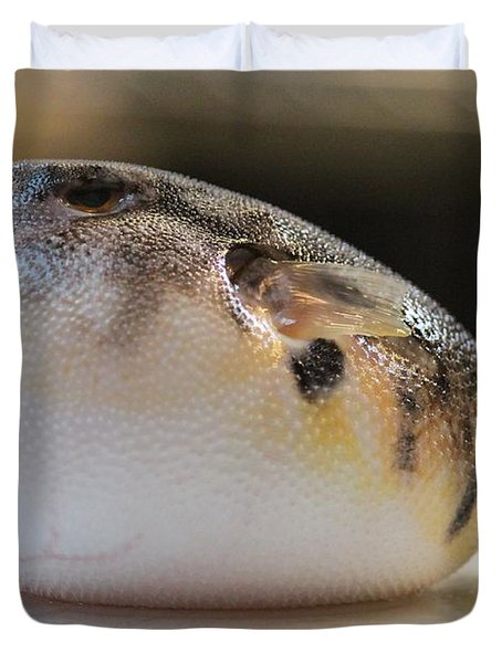 Blowfish 2 Duvet Cover by Cynthia Snyder