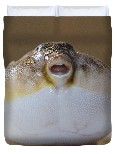 Blowfish Duvet Cover by Cynthia Snyder