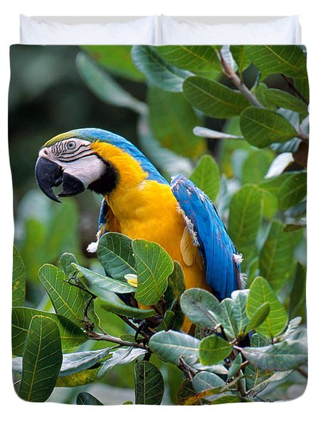 Blue And Yellow Macaw Duvet Cover by Art Wolfe