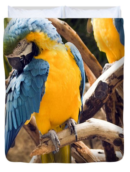 Blue And Yellow Macaw Pair Duvet Cover