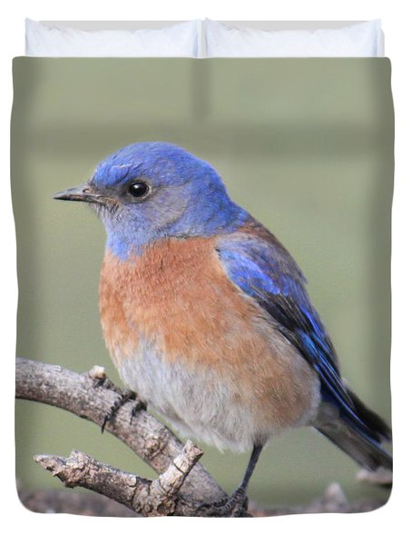 Duvet Cover featuring the photograph Blue Bird At Sedona by Debbie Hart