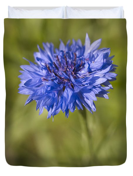 Blue Cornflower Duvet Cover