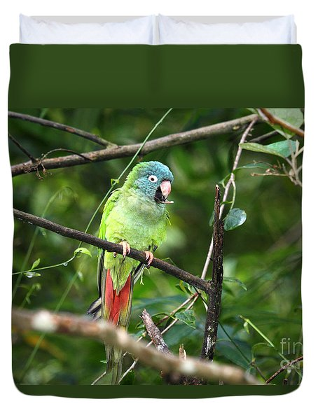 Blue Crowned Parakeet Duvet Cover by James Brunker
