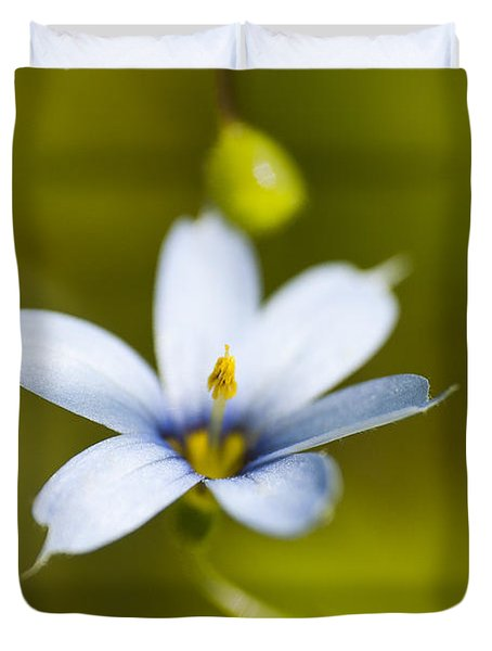 Blue-eyed Grass Flower Duvet Cover