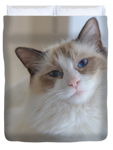 Blue-eyed Ragdoll Kitten Duvet Cover