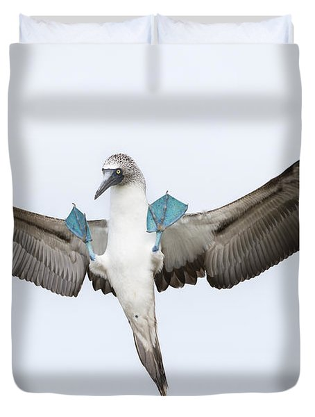 Blue-footed Booby Landing Galapagos Duvet Cover by Tui De Roy