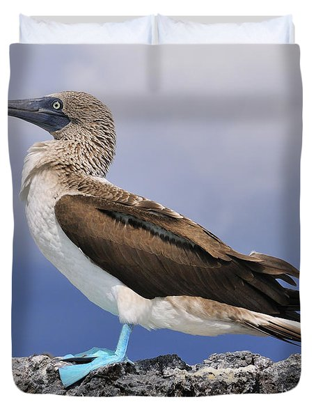 Blue-footed Booby Duvet Cover by Tony Beck