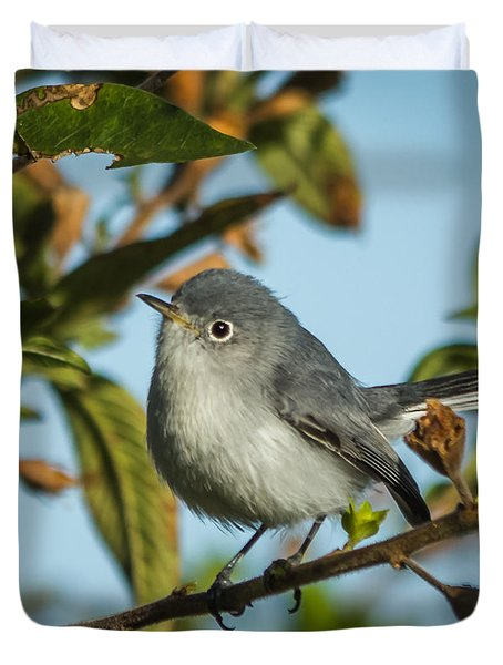 Blue-gray Gnatcatcher Duvet Cover by Jane Luxton