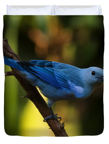 Blue Grey Tanager Duvet Cover by Chris Flees