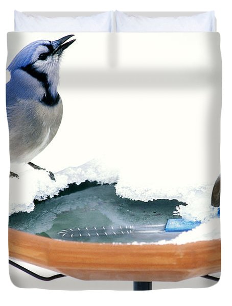 Blue Jay At Heated Birdbath Duvet Cover