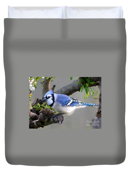 Blue Jay Beauty Duvet Cover