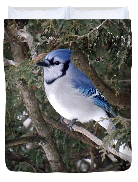 Duvet Cover featuring the photograph Blue Jay In The Cedars by Brenda Brown