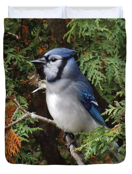 Duvet Cover featuring the photograph Blue Jay In Cedar Tree 2 by Brenda Brown
