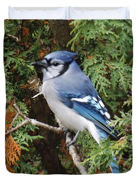Duvet Cover featuring the photograph Blue Jay In Cedar Tree by Brenda Brown