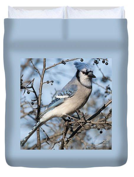 Blue Jay.. Duvet Cover by Nina Stavlund
