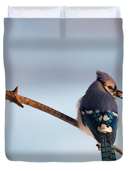 Blue Jay With Nuts Duvet Cover