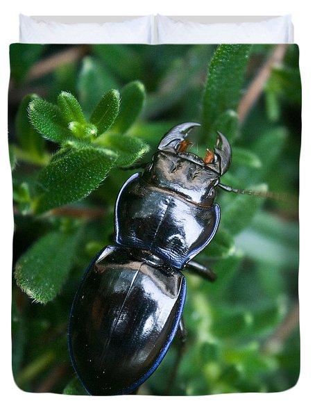 Blue Lined Beetle Duvet Cover