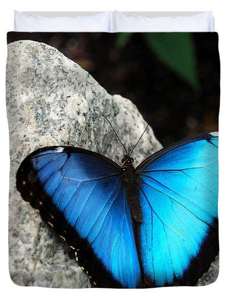 Blue Morpho Butterfly Duvet Cover by Eva Kaufman
