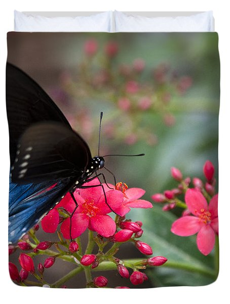 Blue Swallowtail Butterfly  Duvet Cover by Saija  Lehtonen