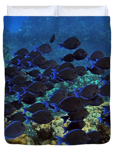 Blue Tangs Duvet Cover by Carey Chen