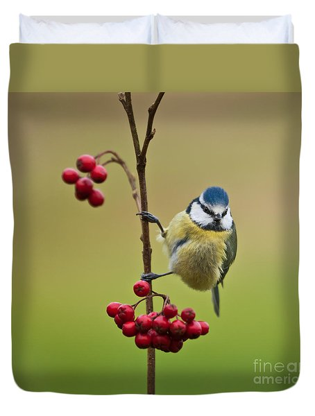 Blue Tit With Hawthorn Berries Duvet Cover