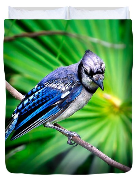 Thoughtful Bluejay Duvet Cover