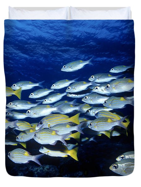 Bluelined Snappers And Yellowspot Emperors Duvet Cover