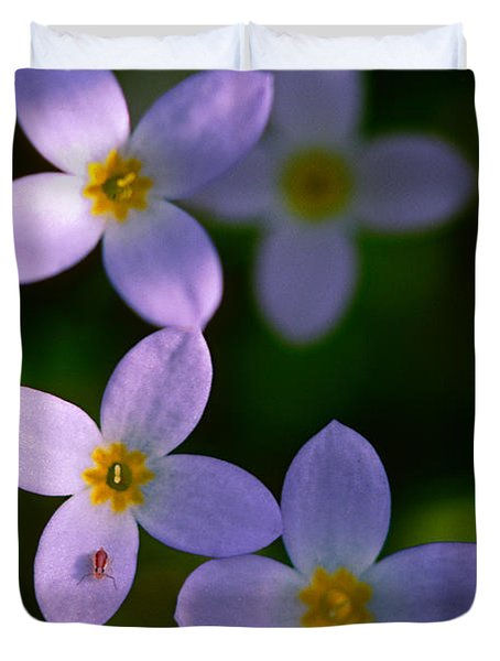 Duvet Cover featuring the photograph Bluets With Aphid by Marty Saccone