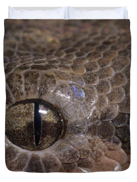 Boa Constrictor Duvet Cover by Chris Mattison FLPA