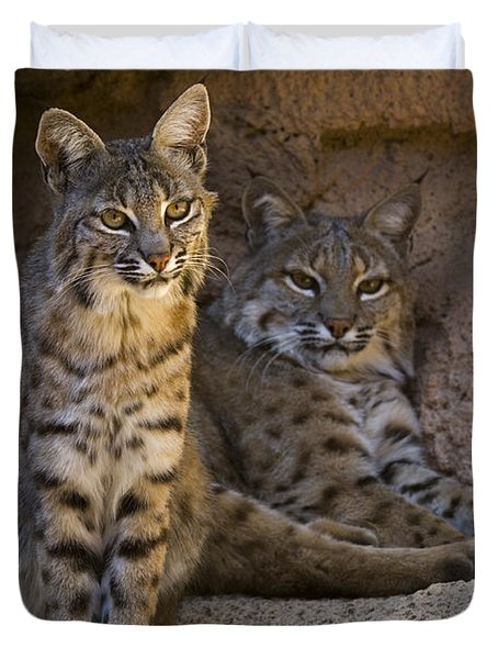 Duvet Cover featuring the photograph Bobcat 8 by Arterra Picture Library