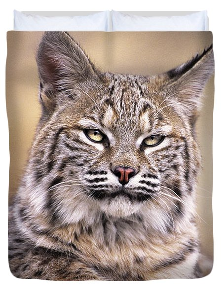 Duvet Cover featuring the photograph Bobcat Cub Portrait Montana Wildlife by Dave Welling