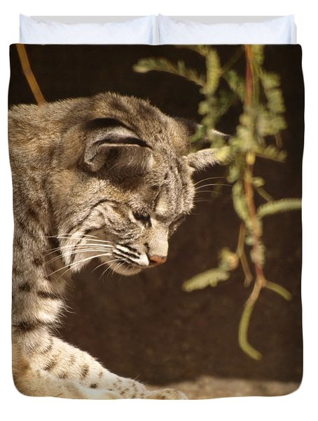 Bobcat Duvet Cover by James Peterson