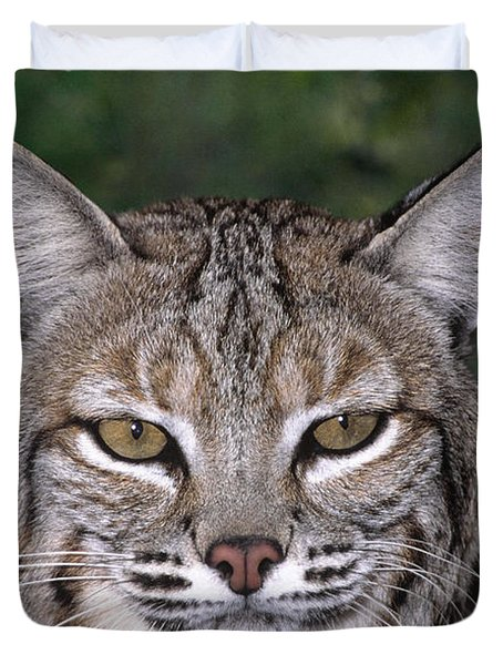Duvet Cover featuring the photograph Bobcat Portrait Wildlife Rescue by Dave Welling